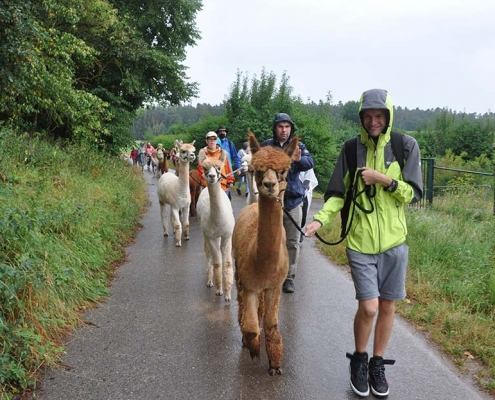 Die OBA-Gruppe wandert im Regen mit Alpakas